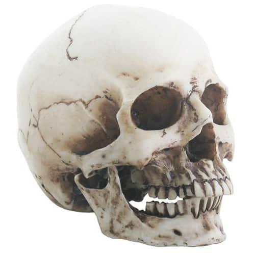 Small Human Resin Skull